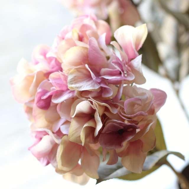 Hortensia d'automne Rose